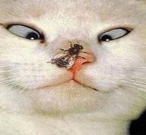 про кошек на английском,